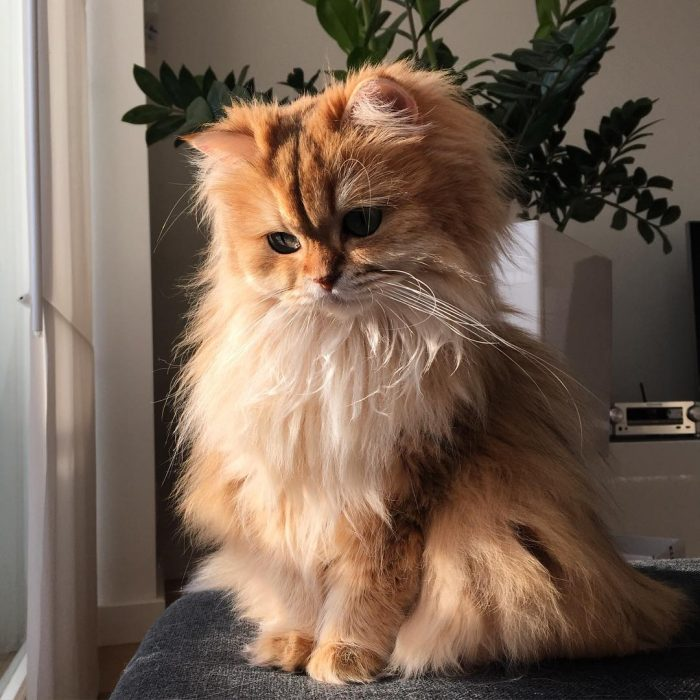 Smoothie - Foto del gatto su Instagram 10