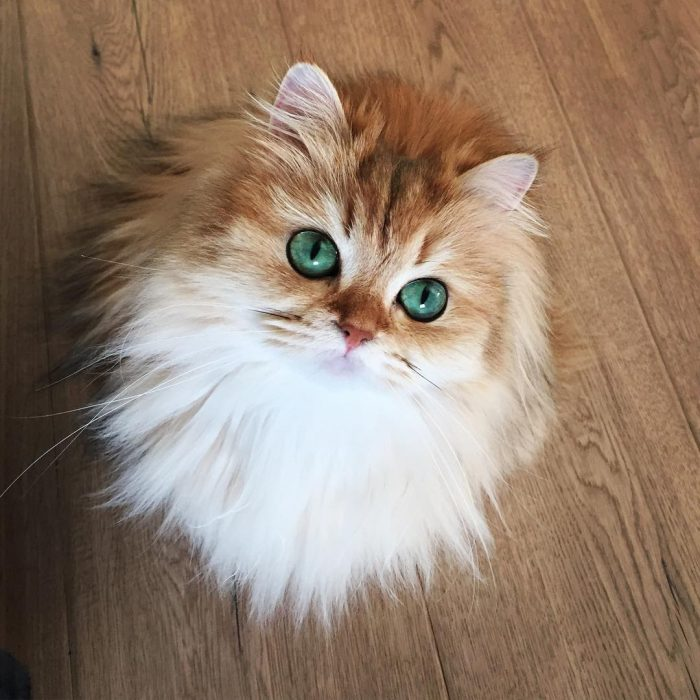 Smoothie - Foto del gatto su Instagram 2