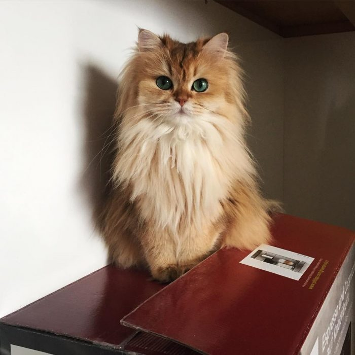 Smoothie - Foto del gatto su Instagram 7