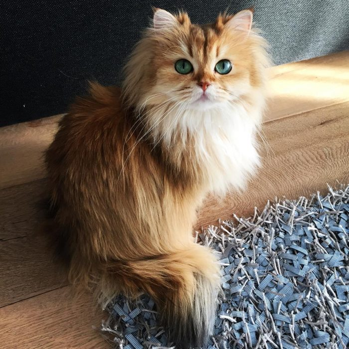 Smoothie - Foto del gatto su Instagram 9