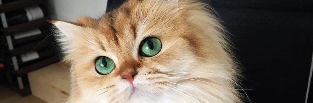 Il gatto più bello del mondo del 2016
